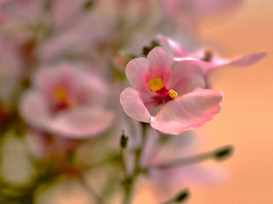 Un sueño llamado Bouquets de Colombia